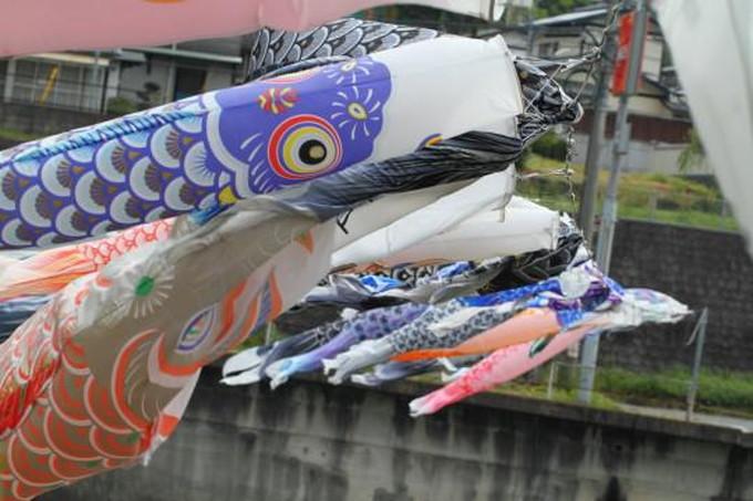 初節句の鯉のぼり