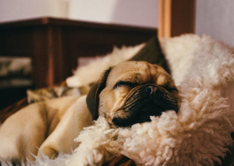 犬 リラックス