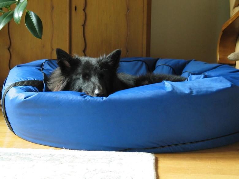 手作りの夏用ベッドで休む犬