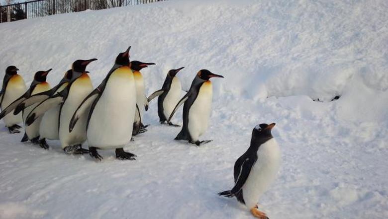 旭川動物園でペンギン見学