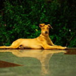 休憩中の犬