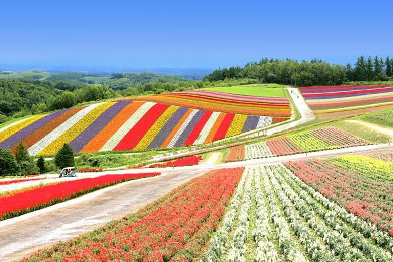 北海道の綺麗スポット:四季彩の丘