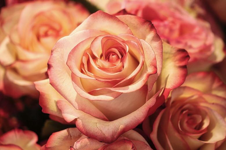 バラの香りで梅雨を乗り切ろう