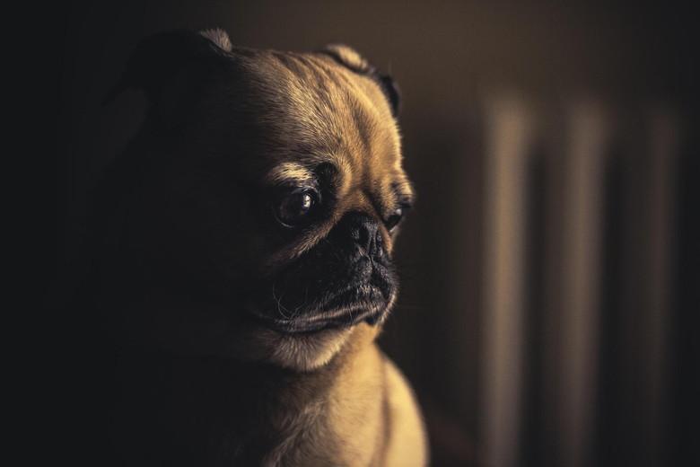 元気がない犬