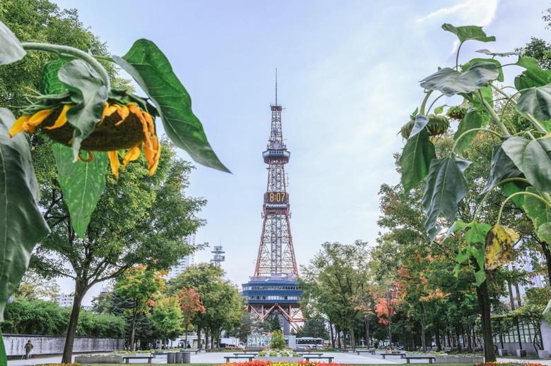 北海道タワーとひまわり
